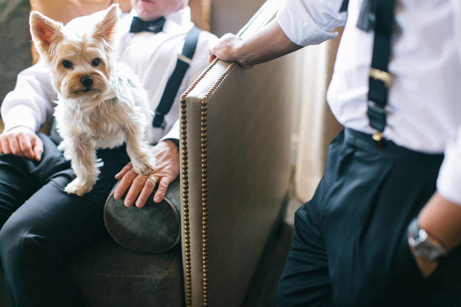 Groom's dog sits on his lap while both grooms get ready before the wedding