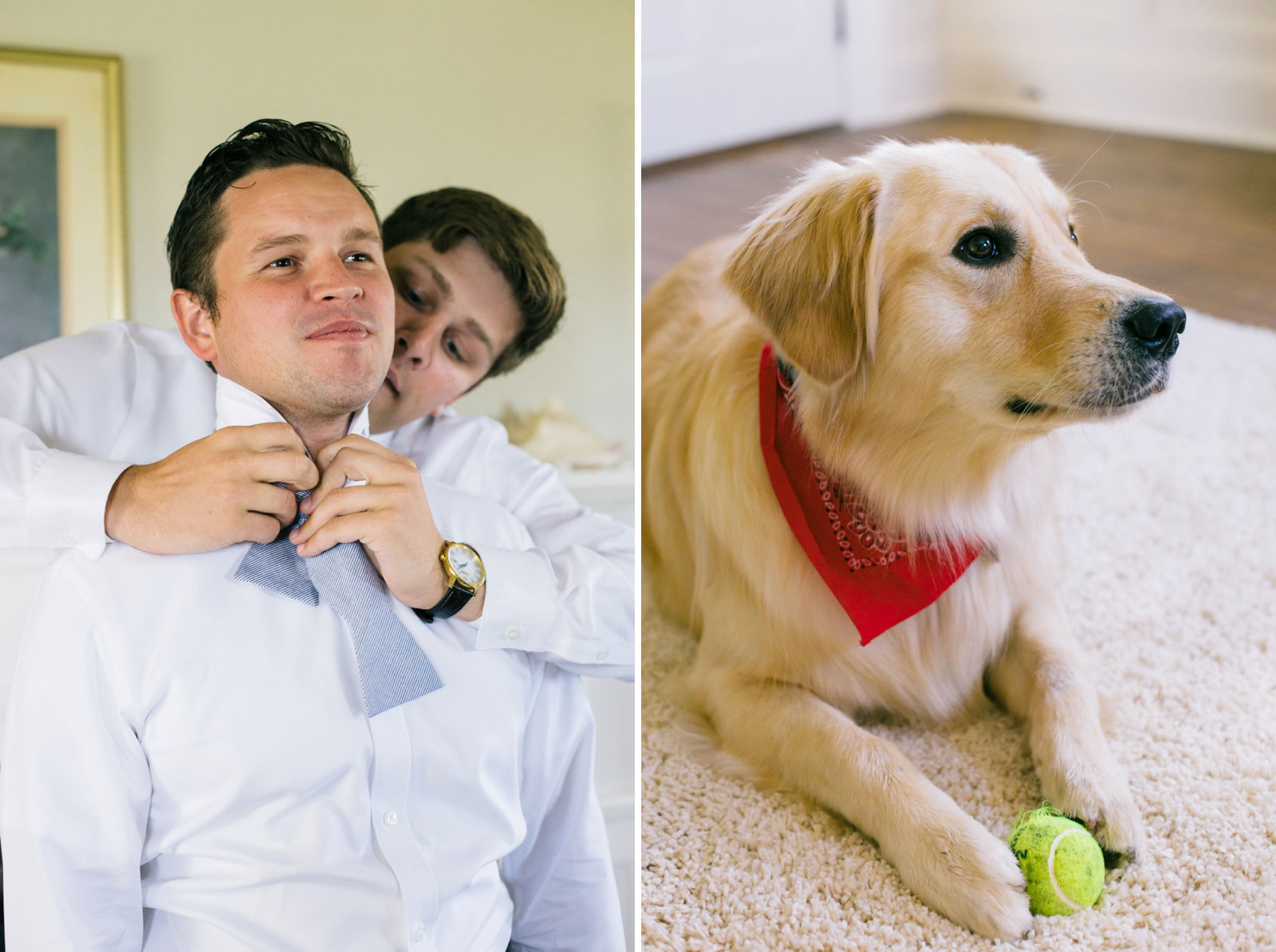 Groom getting ready, groomsman helping groom put on his bow tie, golden retriever dog