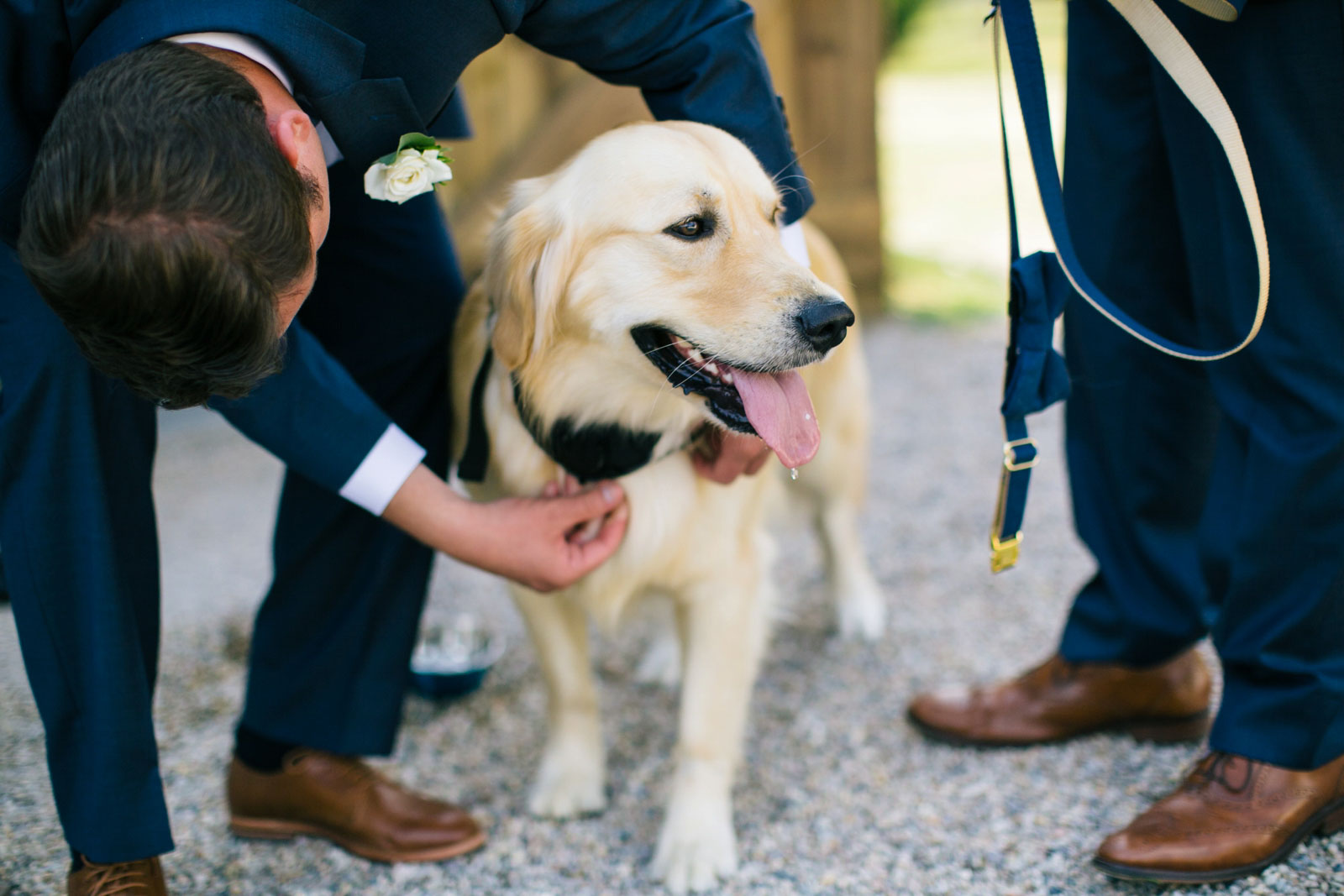 groom putting leash on golden retriever to walk down the aisle at the wedding ceremony.
