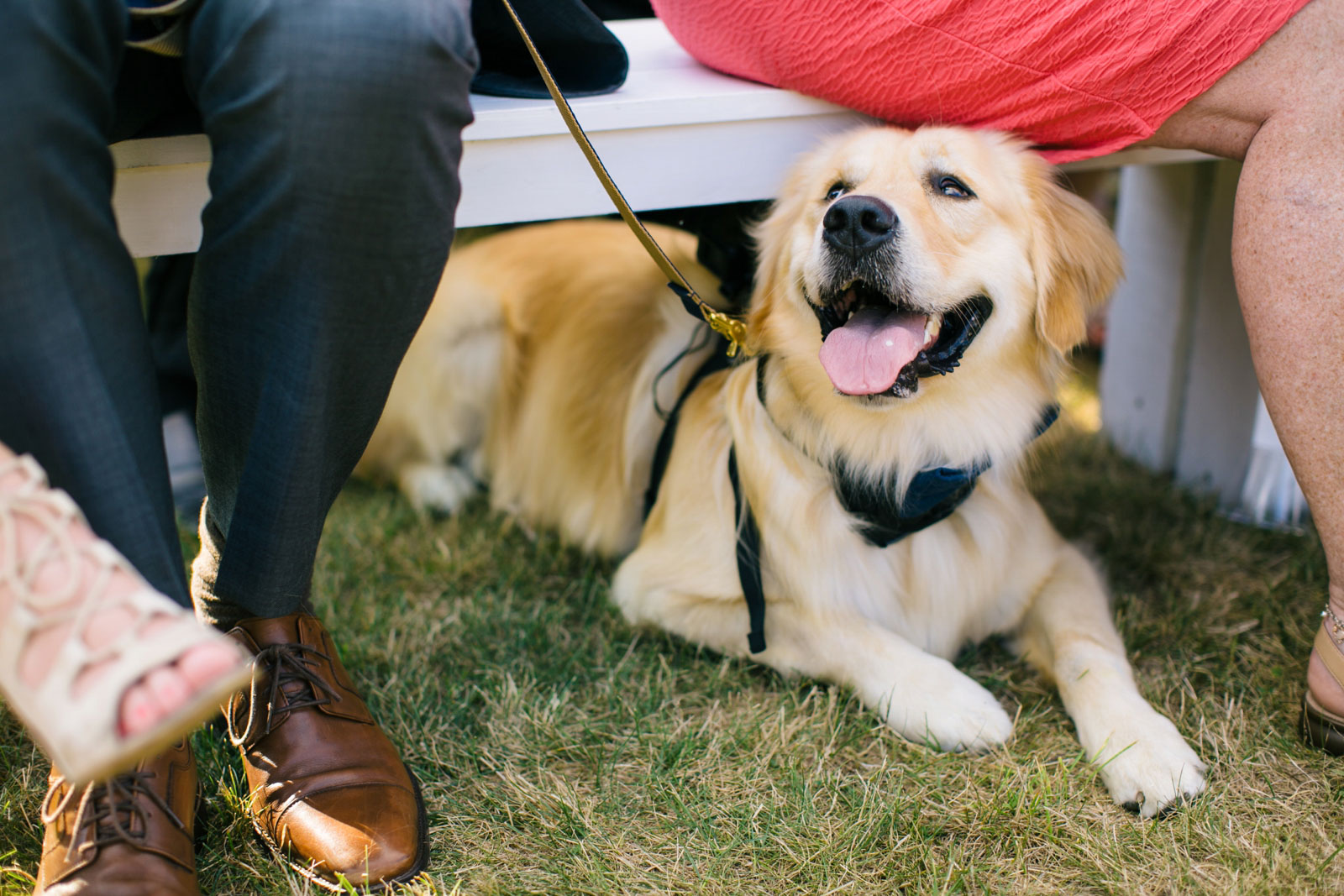 Golden retriever dog panting and smiling laying under bench during wedding ceremony.