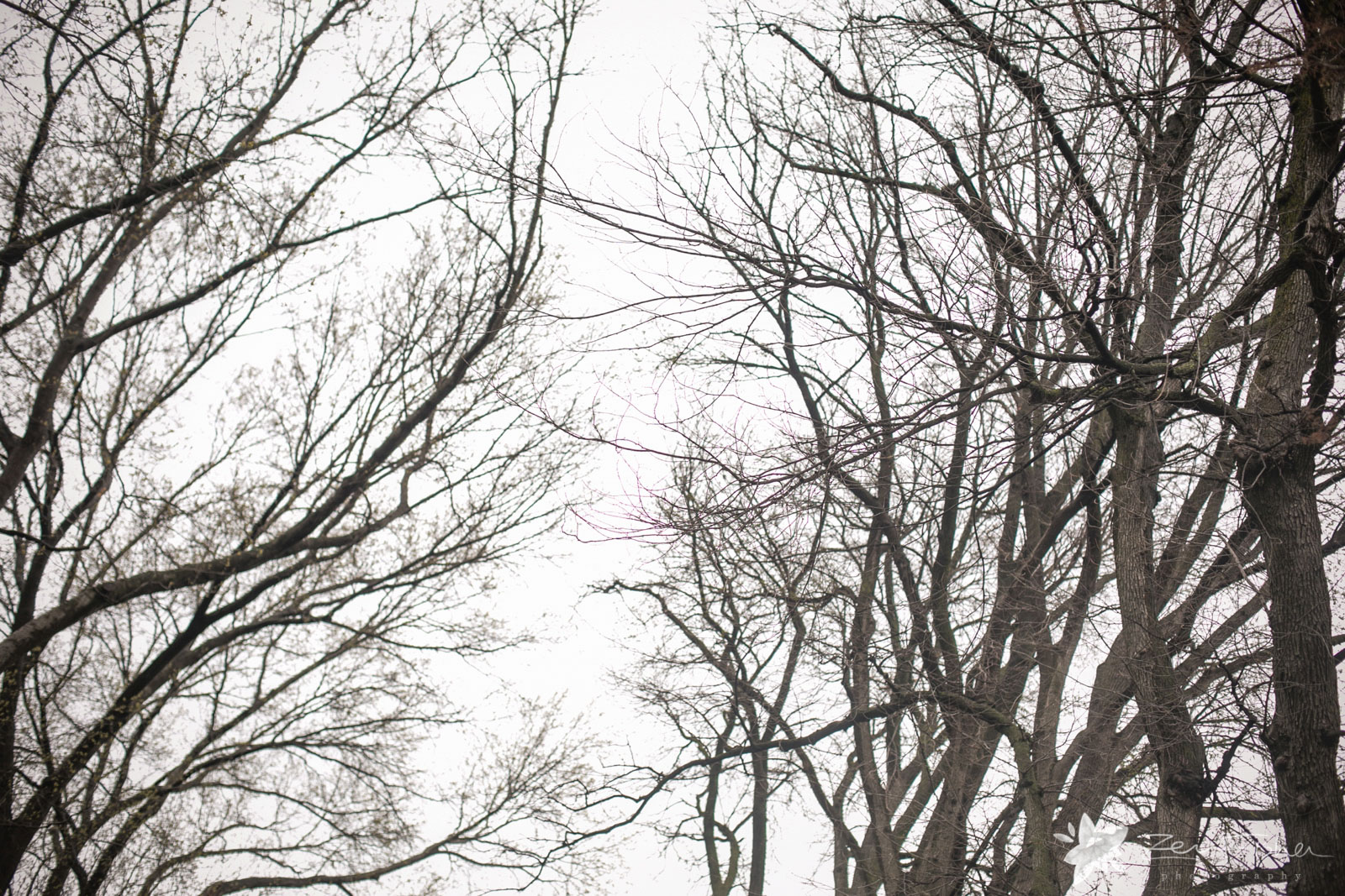The bare branches of the trees in winter create poetic flowing lines, with an overcast sky.