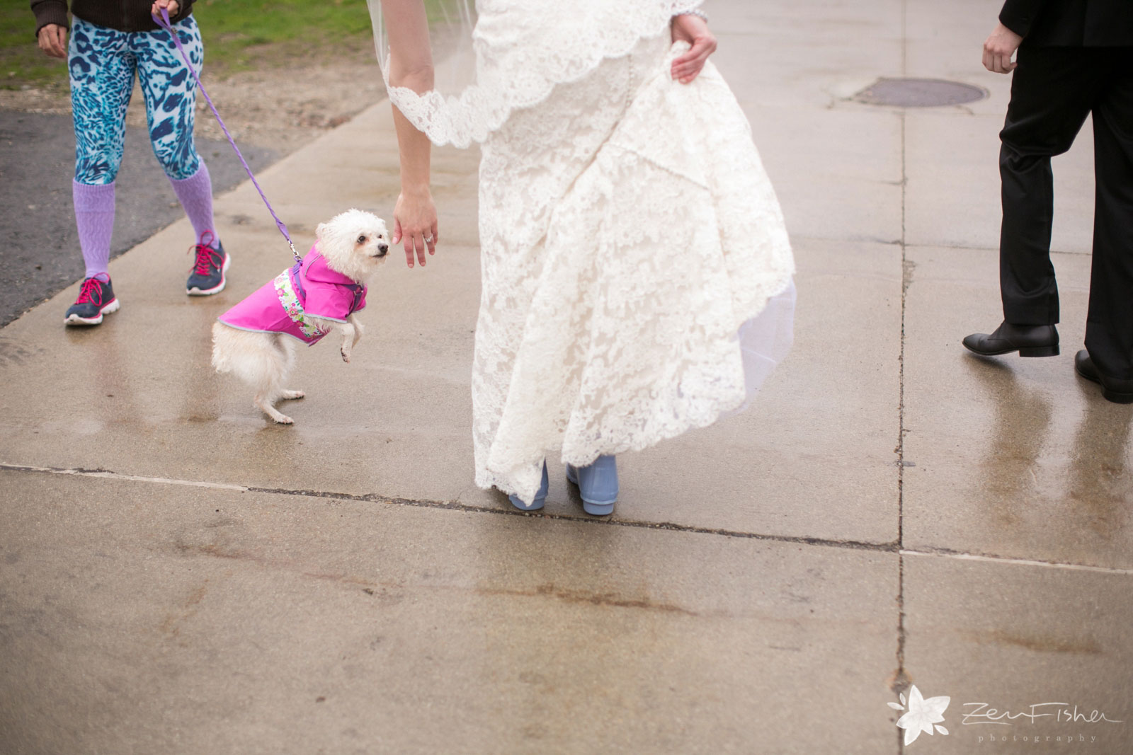 Silly shot of bride from behind bending over to play with a passing dog on the sidewalk.