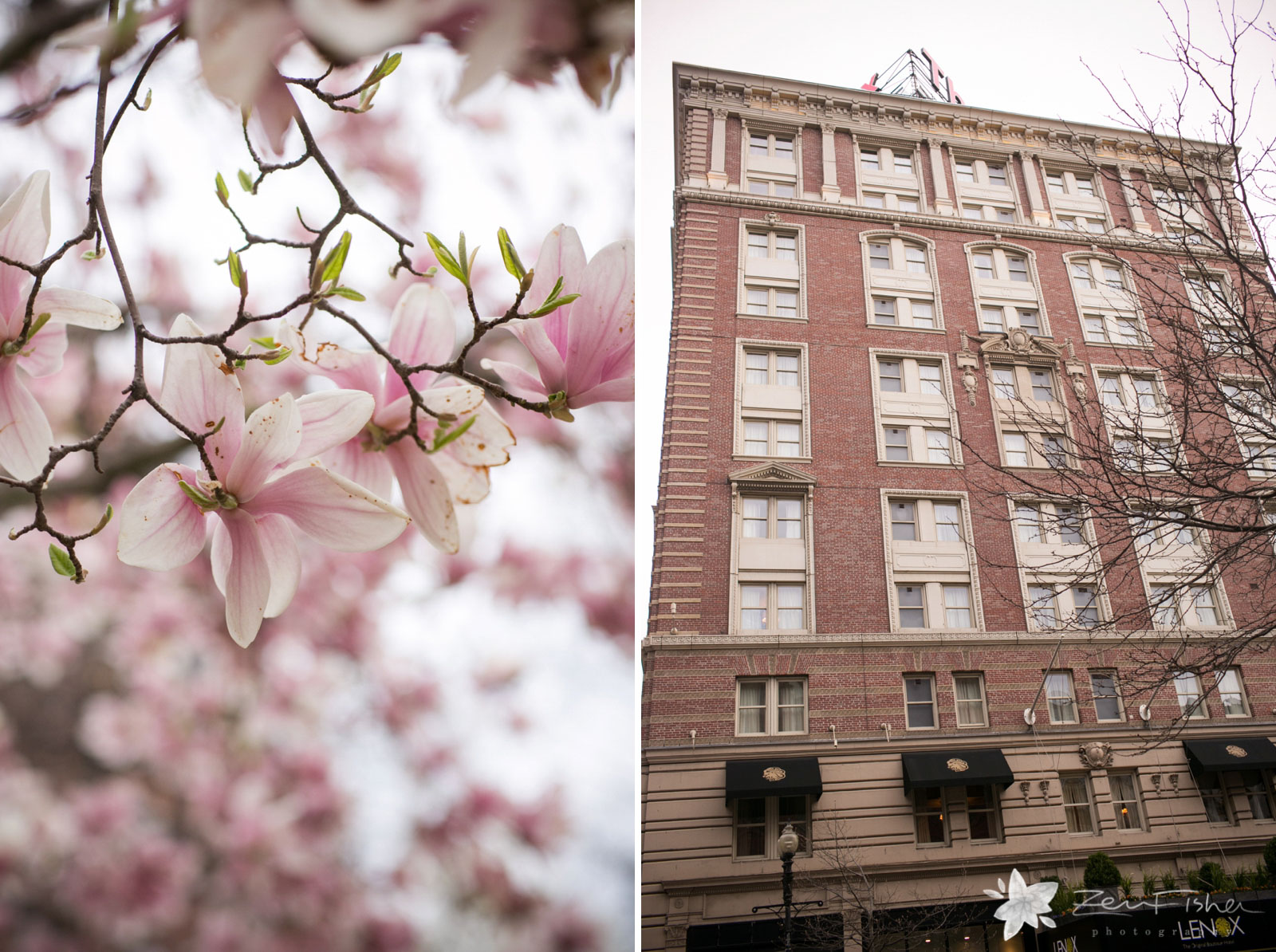 Detail of magnolia trees in full bloom, and the facade of the Lenox Hotel.