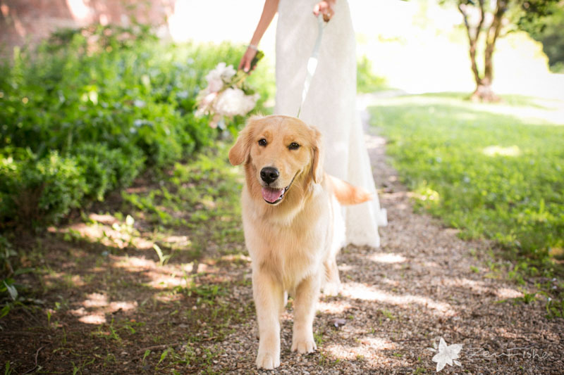 Weddings at the Lyman Estate, Bride, Bridal Portrait, Wedding Dog, Boston Weddings, Boston Bridal