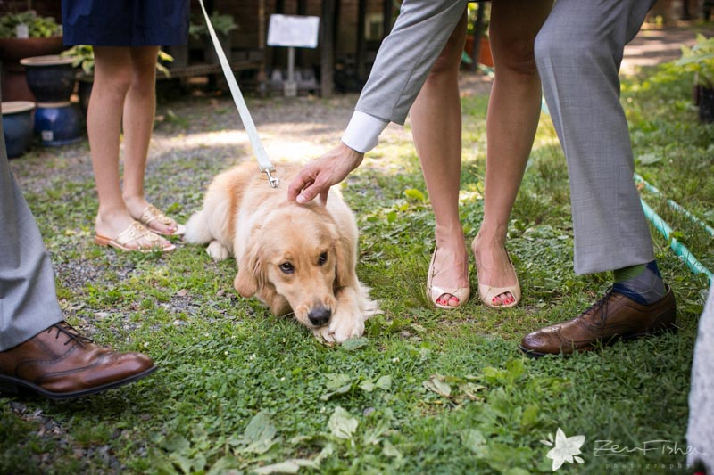 Weddings at the Lyman Estate, Wedding Dog, Dog of Honor, Boston Weddings, Boston Bridal