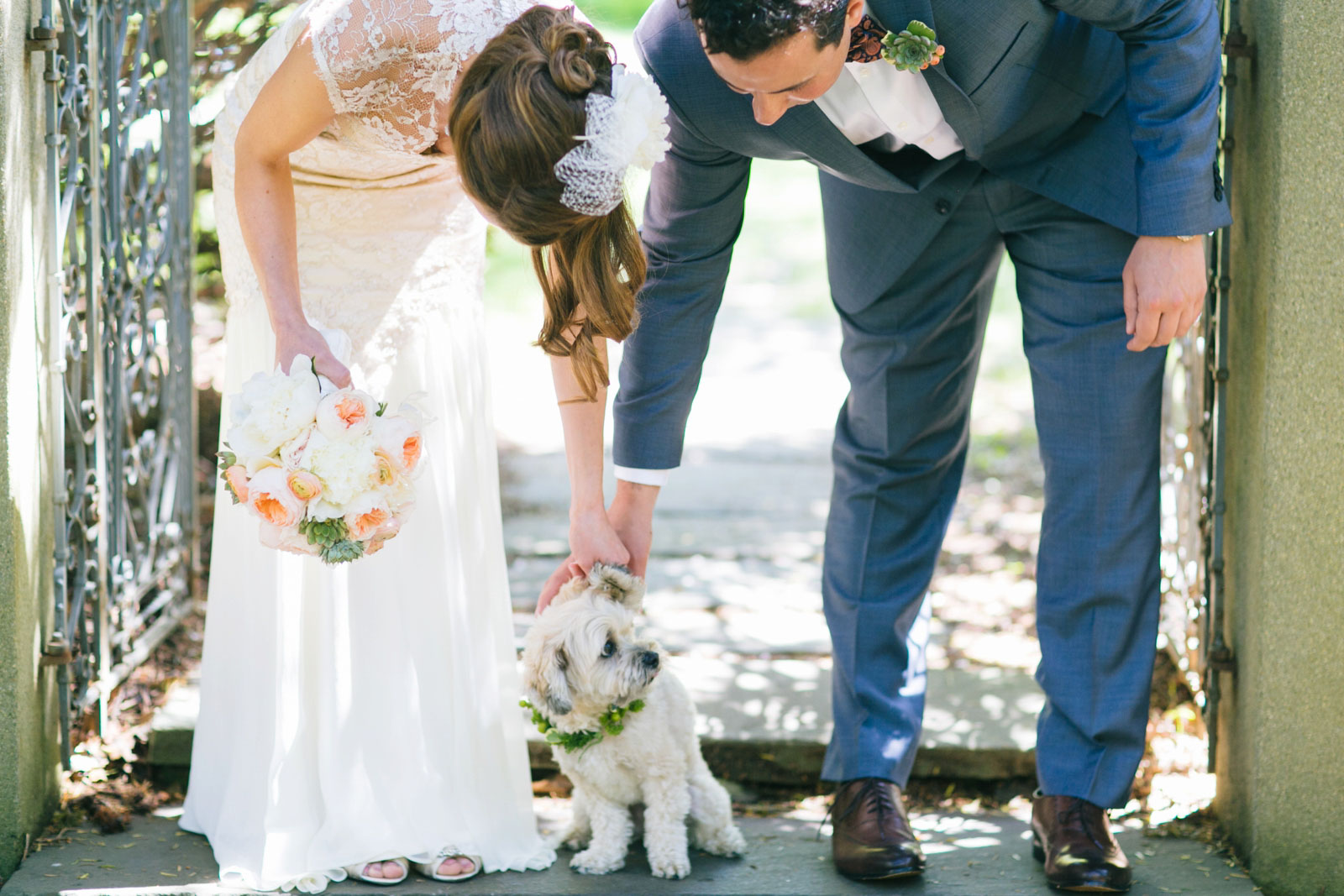 bride and groom petting their dog during first look at Mass Audubon's wildlife sanctuary