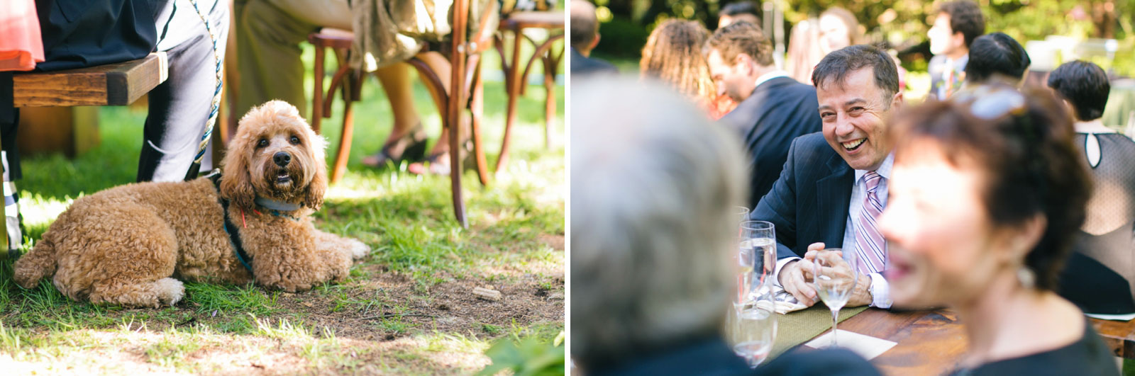 candids of guests at outdoor wedding reception at dog-friendly wedding venue in Boston