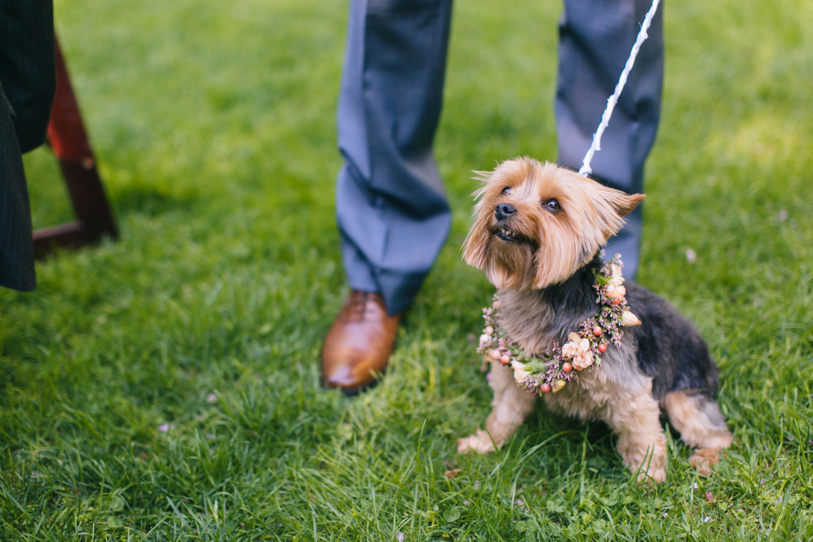 dog wearing flower collar at late spring daytime outdoor wedding reception in Boston