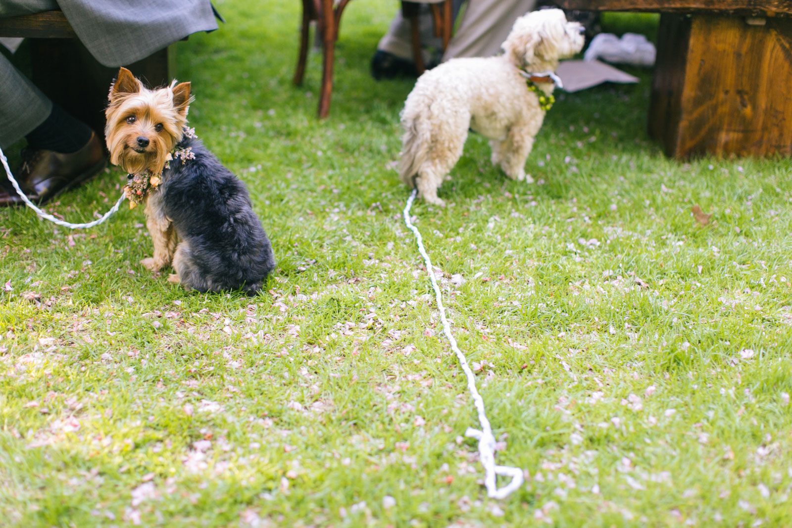 dogs playing in the grass during wedding reception at dog-friendly outdoor wedding venue near Boston